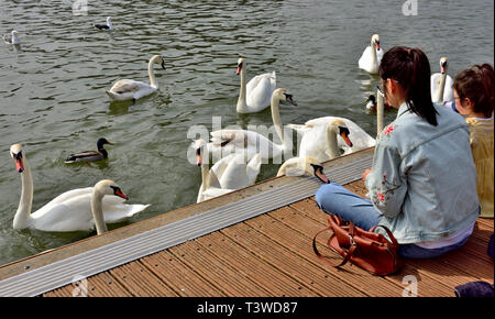 Swans and duck by dock with woman and child watching - Stock Image