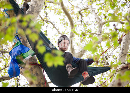 London, UK. 23rd April 2019. A climate change activist from Extinction Rebellion sits in a hammock strung between the upper branches of a tall tree hi - Stock Image