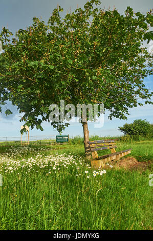 A timber bench under a tree on a Spring morning near Weston on Avon, Warwickshire - Stock Image
