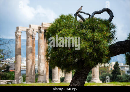 Athens, Greece. The Temple of Olympian Zeus. - Stock Image