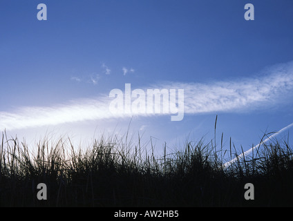 Sand dunes silhouetted agains a bright blue summer sky - Stock Image