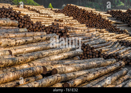 Pile Of Wood Logs With Forest - Stock Image