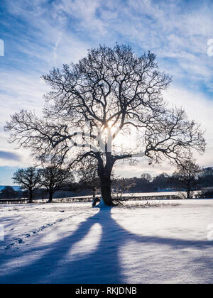 A backlit shot of a silhouetted tree in a snowbound landscape. - Stock Image