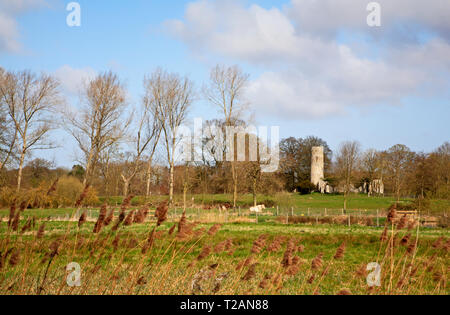 A view across grazing meadows to the ruined Church of St Theobald at Great Hautbois near Coltishall, Norfolk, England, United Kingdom, Europe. - Stock Image