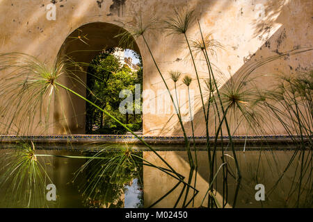 SEVILLE, ANDALUSIA / SPAIN - OCTOBER 14 2017: GREEN GRASS IN WATER - Stock Image