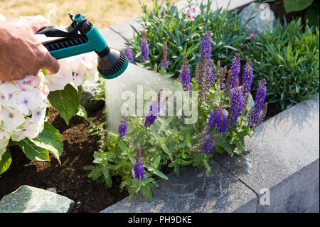 Spraying plants in a planter in the summer - Stock Image