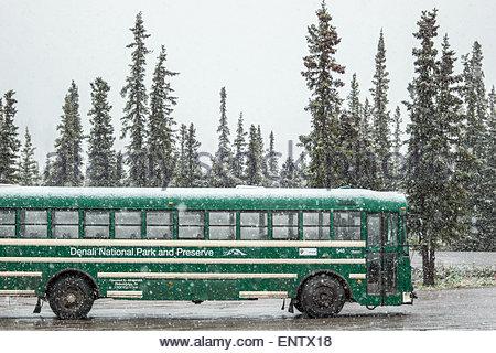 Denali national park shuttle bus - Alaska - Stock Image