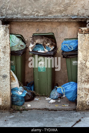 Scavenging Cat on a Wheelie Bin. - Stock Image