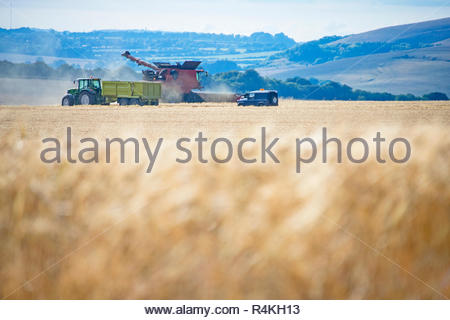 Summer field barley crop harvest with combine harvester and tractor trailer on farm - Stock Image