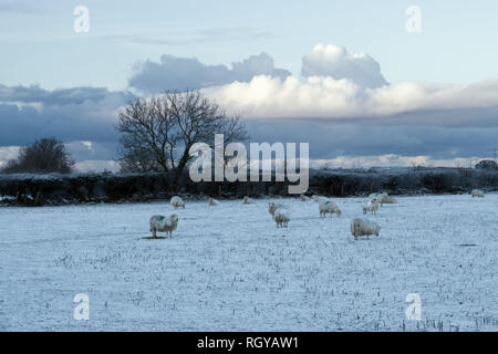 Winter scene in North Wales near the village of Tregarth in Gwynedd. - Stock Image