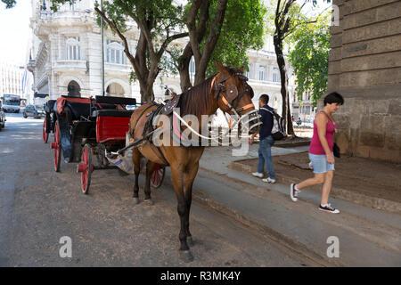Cuba, Havana. Horse and buggy. Credit as: Wendy Kaveney / Jaynes Gallery / DanitaDelimont.com - Stock Image
