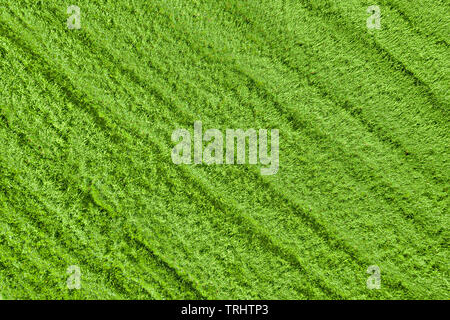 Green grass on the field top aerial view. Natural texture and background - Stock Image