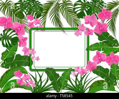 Green tropical leaves of banana, coconut, monstera and ogawa, Pink orchid. space for ads, advertising. illustration - Stock Image