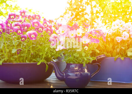 Purple, violet and blue pansy flowers in 3 different enameled pots on a balcony table in bright spring sunlight, background template - Stock Image