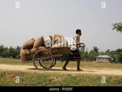 BANGLADESH Men hauling loads of rice, Kumargati village, Mymensingh region photo by Sean Sprague - Stock Image