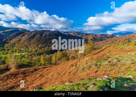 A view from Tarn Hows Intake towards The Old Man of Coniston, Lake District National Park, Cumbria, England, United Kingdom, Europe. - Stock Image