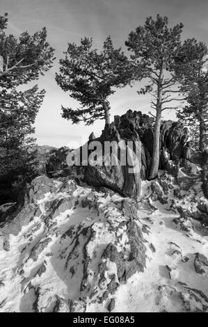 Black and White, winter, Landscape, snow, parks - Stock Image