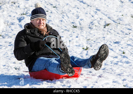 Chippenham, Wiltshire, UK. 2nd February, 2019. A man enjoying the snow before it thaws is pictured in a local park in Chippenham as he slides down a hill on a sledge. Credit: Lynchpics/Alamy Live News - Stock Image