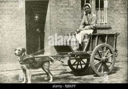 Milkwoman on her morning round, with a dog-drawn cart, Belgium. - Stock Image