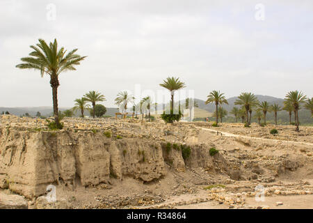 Palm trees growing in the excavations of the ancient city of Meggido in Northern Israel. This place is otherwise known as Armegeddon the future scene  - Stock Image