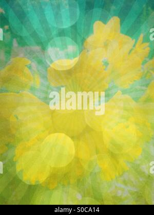 Abstract background of pretty, yellow daffodils with rising sun geometric pattern, green and lime vintage paper - Stock Image
