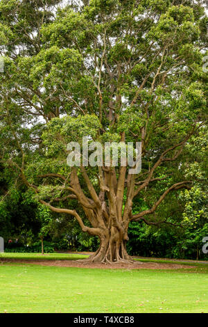The Royal Botanic Garden covers 74 acres at Farm Cove, adjacent to the central business district of Sydney, New South Wales, Australia. - Stock Image