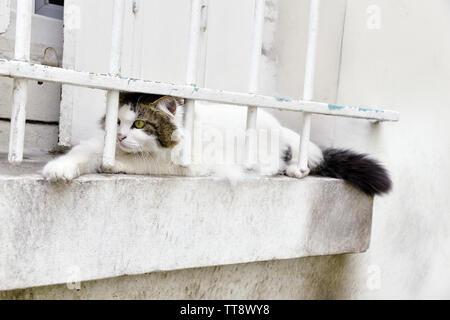 Stray cat - Paris - France - Stock Image