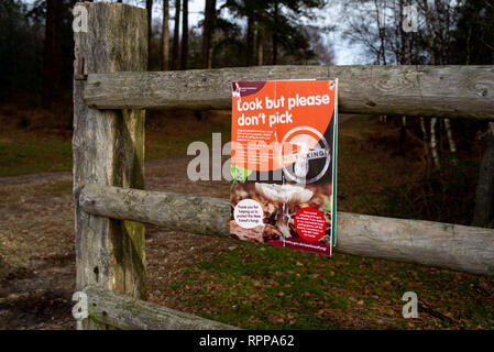 Environmental warning sign in the New Forest National park of not to pick fungi and mushrooms, look but do not pick. - Stock Image