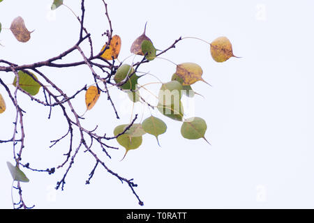 Green yellow leaves pattern background, Natural background and wallpaper - Stock Image