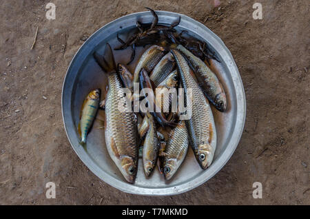 Fresh fish fished in a river in the Laotian countryside, Phongsali, Laos - Stock Image