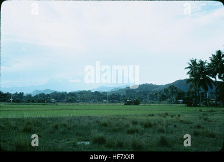 Rice agriculture, below Mt. Kinabalu - elevation 4,101 meters; Sabah, N Borneo, Malaysia. - Stock Image