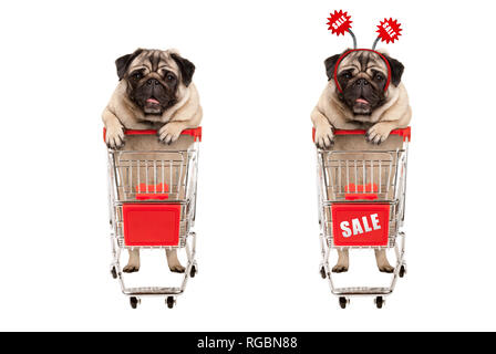 funny smiling shopping pug puppy dog standing behind red wired metal shopping cart with sale sign,  isolated on white background - Stock Image