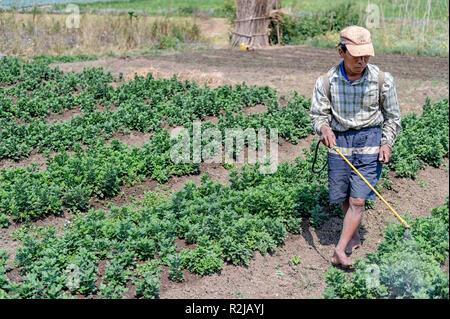 Man spraying vegetable garden with pesticide near  Pyin OO Lwin, Myanmar - Stock Image