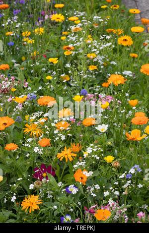 Blumenwiese, Wildblumenwiese, Wildblumen-Wiese, Blumenmischung, Wildblumen, Blumenmischung 'Werratal', Insektenschutz, wildflower meadow - Stock Image