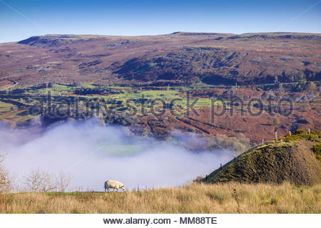 Autumn mist on the Blorenge mountain, Brecon Beacons National Park, Monmouthsire, Wales, UK – sheep in foreground of landscape. - Stock Image