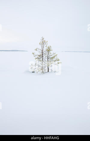 Small spruce trees in snow during winter. Looking over frozen and snow covered Lake Malaren from Angson (Ängsön) - Stock Image