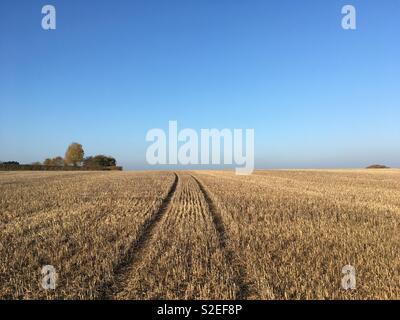 Field of maize stubble, Petherton, Somerset, UK - Stock Image