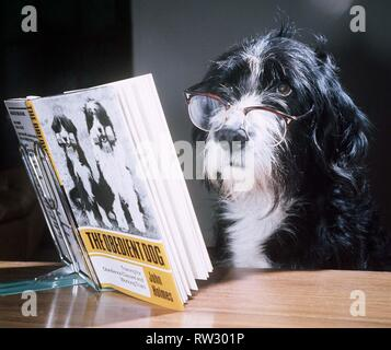 Ben the obedient dog reading a book - February 1976 - Stock Image