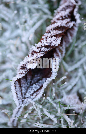 sculptural frosty winter leaf and grass Jane Ann Butler Photography  JABP1812 - Stock Image
