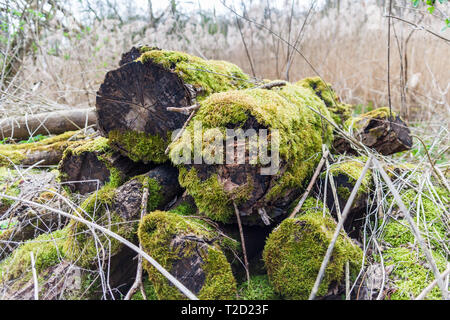 pile of logs covered in moss - Stock Image