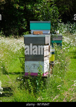 Beehive in Wild Flowers, South Stoke, Oxfordshire, England, UK, GB. - Stock Image