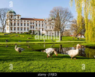 Celle Castle at spring, flowers celebrate 725 year anniversary,goose in front of pond, Celle, Lower Saxony, Germany. - Stock Image