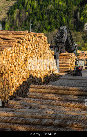 Heavy Machine Working With Wood At Sawmill - Stock Image