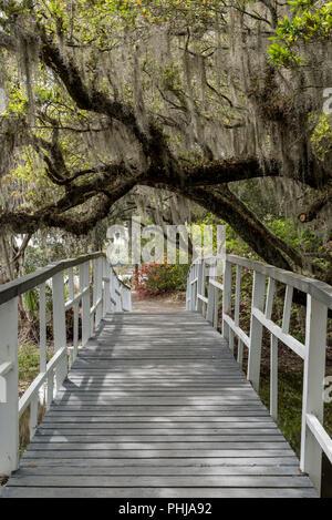 Spanish Moss Covered Branches Cover Bridge in Charleston Garden - Stock Image