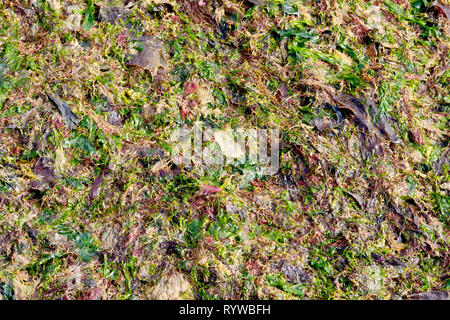 An abstract shot of various colourful seaweeds washed up on the beach after a stormy night. - Stock Image
