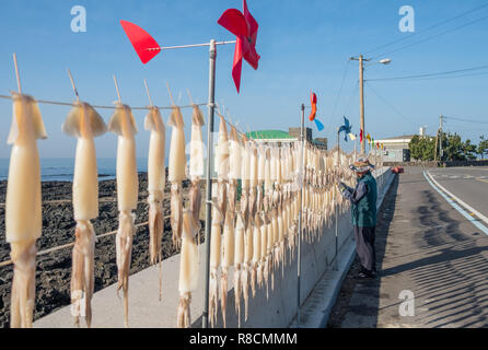 Squid being hung to dry straight along the road in the island of Jeju, South Korea. Depicted side view of squid line, with person hanging them - Stock Image