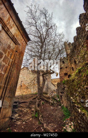 Old Tree with Distinct Roots in the Ananuri Fortress Complex, taken in April 2019rn' taken in hdr - Stock Image