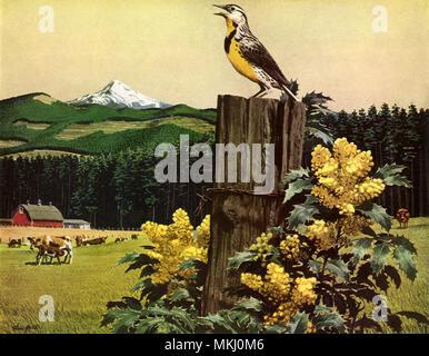 Yellow-Bellied Bird - Stock Image