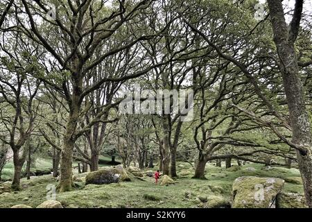 Girl in red coat explores the tangled forest. - Stock Image