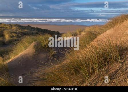 Saunton Sands from the sand dunes of Braunton Burrows, Devon, England. Winter (January) 2018. - Stock Image